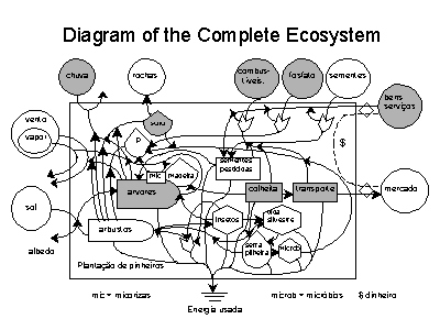 diagram of the complete ecosystemslide