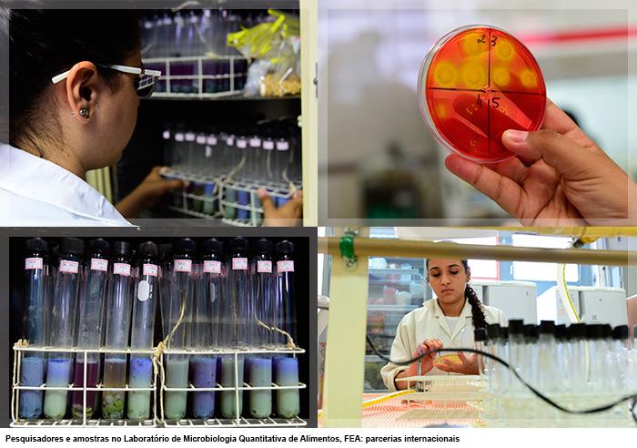 Pesquisadores e amostras no Laboratório de Microbiologia Quantitativa de Alimentos, FEA: parcerias internacionais