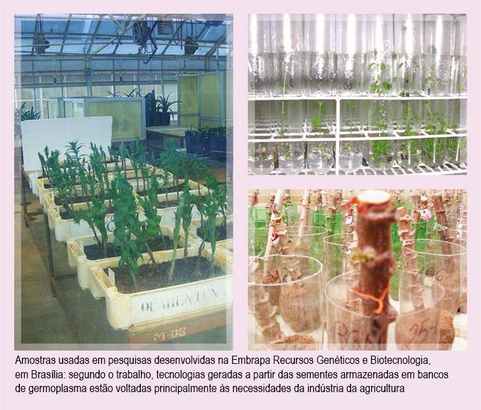 amostras usadas em pesquisas desenvolvidas pela Embrapa Recursos Genéticos e Biotecnologia