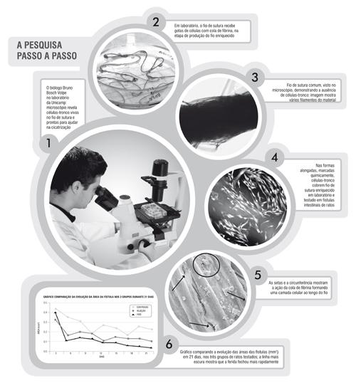 infográfico que resume a pesquisa