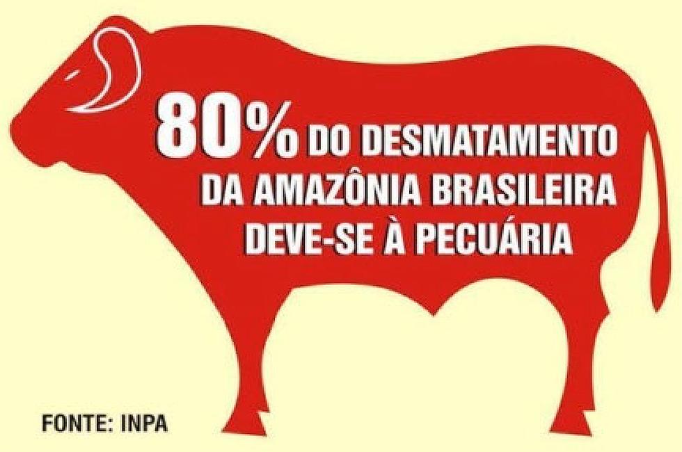 Resultado de imagem para amazonia desmatamento pecuária