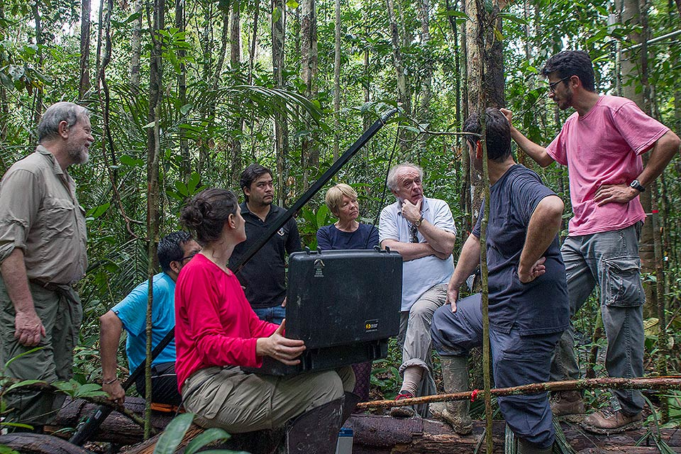 Pesquisadores já mediram diversos parâmetros do ecossistema local, como direção e velocidade do vento, nível de irradiação solar e a quantidade de fotossíntese realizada pelas folhas das árvores. Foto: AmazonFACE