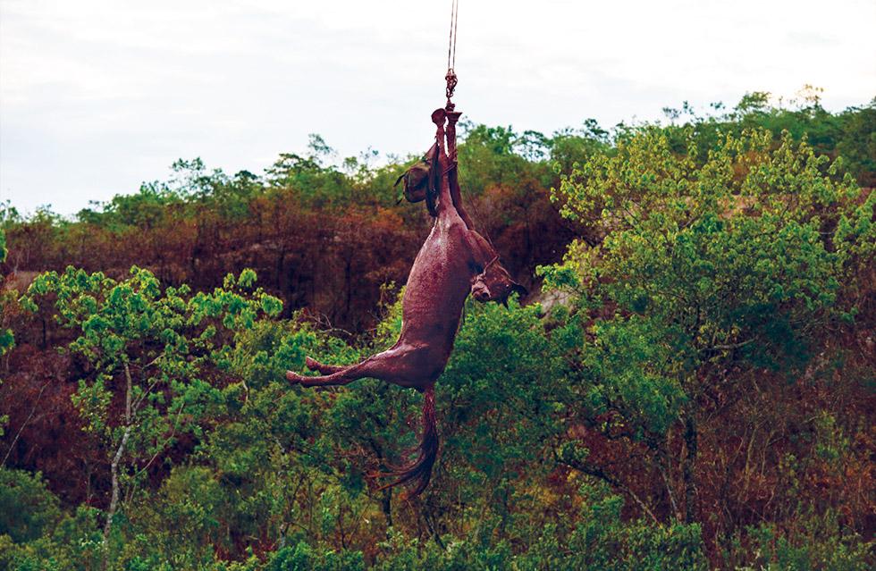 Resgate de um cavalo na lama | Fonte: Rodrigo Freitas, El País