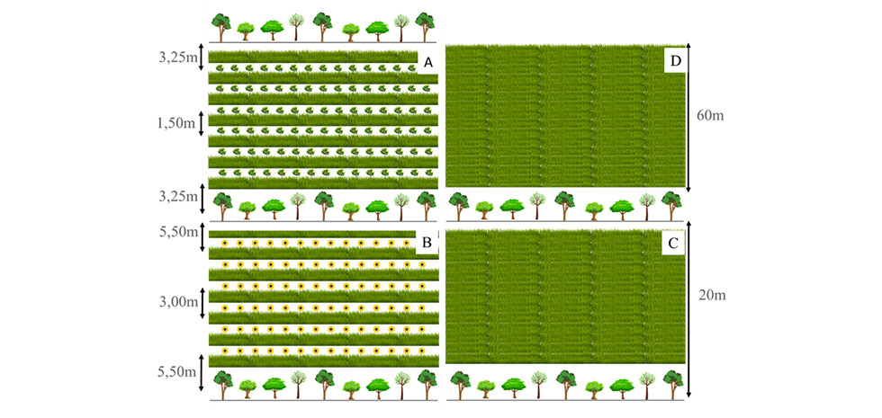 Figura 1. Representação dos sistemas de produção pecuária avaliados em área experimental no município de Iaras (SP). A = T1- Sistema Silvipastoril Intensivo (SSPI com leucena); B = T2 - Sistema Silvipastoril Intensivo (SSPI com tithonia); C = T3- Sistema Silvipastoril (SSP) e D = T4- Sistema Rotacional Intensivo (SR) (Fonte: Rizoma Agropecuária, 2020).