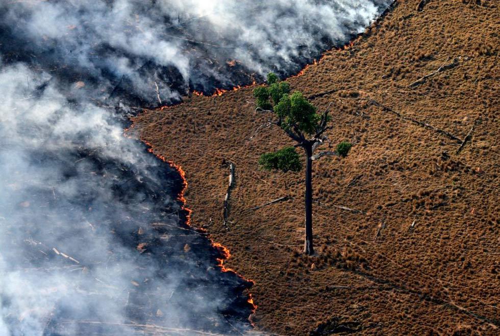 """cenário muito favorável à impunidade, o que estimula desmatamento, garimpo e grilagem, também em outros biomas"""""""
