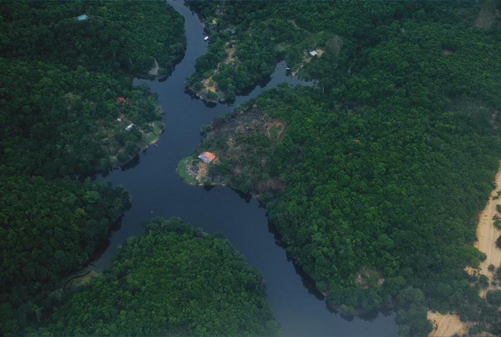 Foto aérea na região de Manaus: Na região amazônica predominam florestas úmidas, com espécies que não possuem adaptações que permitam sobreviver a incêndios frequentes
