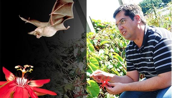 """O professor Marcelo Dornelas, morcego e flores: destaque no periódico """"Plant Biology"""""""