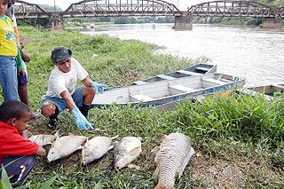 Peixes mortos em razão do derramamento de 8 mil litros de endosulfan no rio Paraíba, na cidade fluminense de Resende, em novembro de 2008: acidente provocou mudanças na lei (Foto: Felipe Vieira / Folha Imagem)