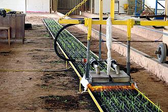 Técnica alternativa usada pelo agrônomo Marcos Roberto da Silva: bons resultados (Foto: Antônio Scarpinetti/Antoninho Perri)